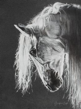 Andalusian PRE Horse Drawing (print)